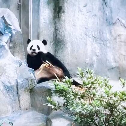 #曦允在成都#成都熊猫基地#曦允3岁5个月#+10