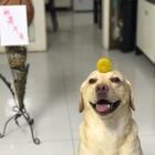 #小布的日常生活# 韩小布在这里祝小伙伴们中秋节快乐!甜甜美美!月饼吃起来!国庆假期后我们不见不散!#宠物#