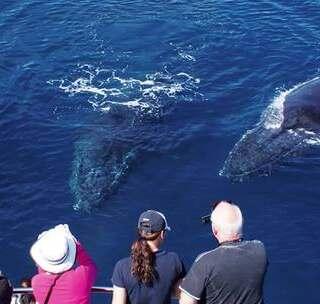 出海观鲸:斯里兰卡近距离观看150吨鲸鱼,10米高水柱惊呆众人!#hi走啦##运动##我要上热门#