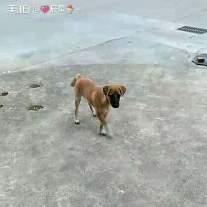 村里的狗狗真的很多,随便找一只来拍。 下次能给他们喂食。