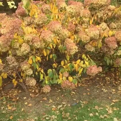 秋天の树叶真美,认识我手里拿的是什么吗?