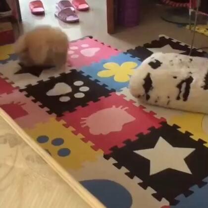 Crazy dog ??????