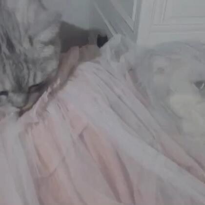 哈哈哈 kitty自己钻衣服里面了把呆逼好奇的😂#萌宠##宠物#