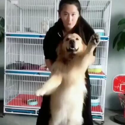 迪奥:快放我下来,我要歇歇#运动##宠物#