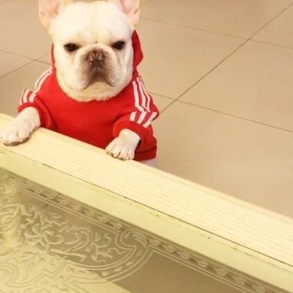 开会啦,加餐😜😜😜#宠物##吃秀##我要上热门@美拍小助手#@宠物频道官方账号