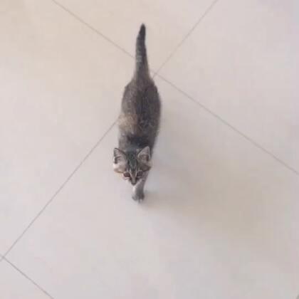 #家有萌宠#真是一只馋猫🐱