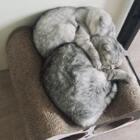 睡惊醒了我的美梦#宠物#