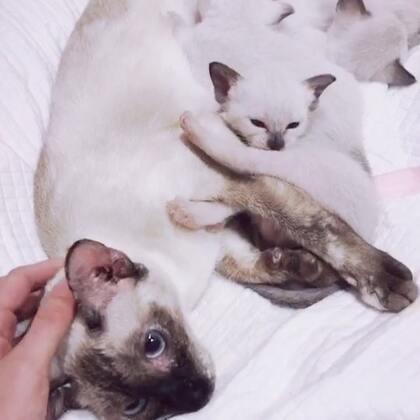 为什么世上会有🐱那么萌的动物呐,你们喜欢猫猫吗,即将变成铲屎官的大檬现在很激动🙈🙈🙈#日常##萌宠##自拍#@美拍小助手