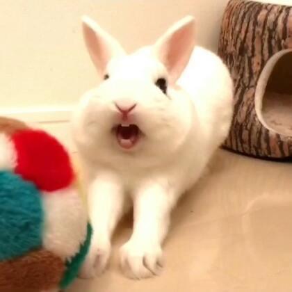 我的小辛巴迷迷糊糊睡醒了,发了一下呆 打个小哈欠🦁️ 萌死我了哈哈哈😆@美拍小助手 @宠物频道官方账号 #萌宠##海外生活##宠物#