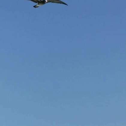 #旅行##我要上热门@美拍小助手##山东长岛#这次去长岛主要是为了看海鸥,虽秋季海鸥少了,但是看见游船它们还是一路追随,场面非常壮观,只可惜飞的太快,镜头不好捕捉,有机会夏季再去一次✌