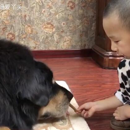 #宠物##我要上热门@美拍小助手##汪星人#丫头即是长辈而且个头又这么大😄可每次在宝宝面前表现得就像一个小娇娃😄这让人情何以堪呢😄😜