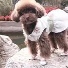 #宠物#幸福可爱的小逗宝和麻麻去逛公园心情美美哒👻👻家里养宠物的朋友们有问题可以加宠物医生微信咨询:douchai 60@红兵Docile