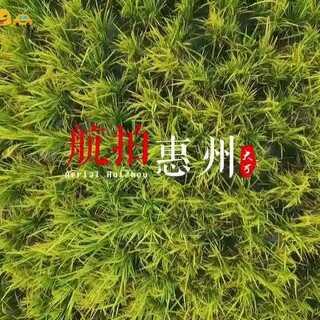 秋天的稻田是一个美丽的风景线!#航拍#