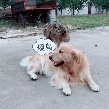 迪奥:麻,你看这傻货#宠物#