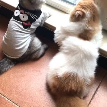 #宠物#下雨天☔️@猫侠