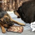 #宠物##我要上热门@美拍小助手##汪星人#真是一对欢喜冤家😓每天为了食物吵来吵去、到最后谁也不吃、就感觉每天都在享受吵架的过程一样🙈真是无聊透顶了😓