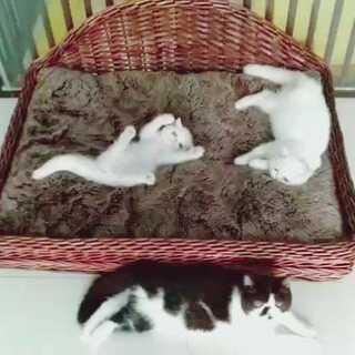 飕飕飕,我是小屎猫我骄傲#猫咪##宠物#