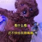 #汪星人##宠物#看什么,还不快给我擦嘴嘴http://item.taobao.com/item.htm?id=528395791953 莎拉麻麻手工狗零食