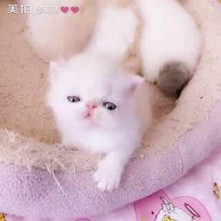 我不喜欢睡觉觉😘#宠物#