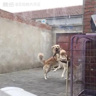 #宠物#内战🌝🌝https://xuhandianhaibao.taobao.com/?spm=2013.1.1000126.d21.4b5569013k4hGI