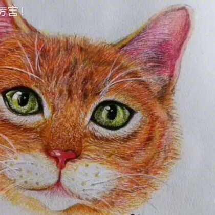 一起来画自己喜欢的小动物吧!彩铅手绘猫咪教程!