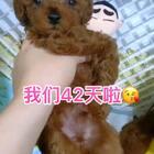 #汪星人##宠物#我们42天啦😘😘😘http://item.taobao.com/item.htm?id=557588985039 莎拉麻麻手工宠物零食