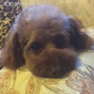 #宠物#流浪狗多多的幸福生活🐶