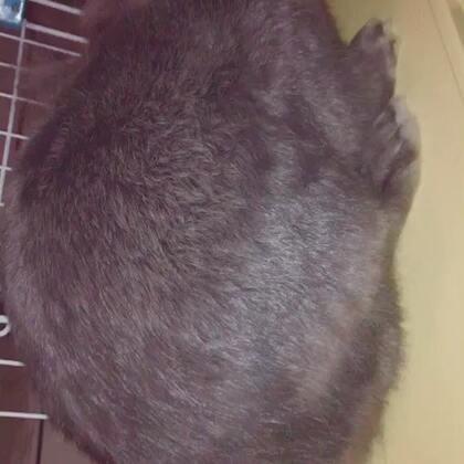 😏😏😏一只胖胖#我的宠物萌萌哒##宠物兔子#