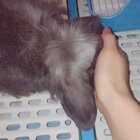 #宠物##宠物兔子#哈哈我又去剪他牛海了~