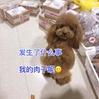 #汪星人##宠物#莎拉,你是不是一脸懵了😂😂😂http://item.taobao.com/item.htm?id=528395791953 莎拉麻麻手工宠物零食!