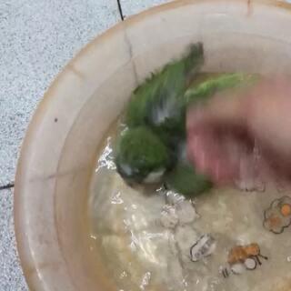 #宠物##和尚鹦鹉#笨笨洗澡🛀🏻