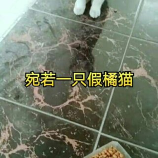#宠物##逗比喵星人#你告诉我,你真的是橘猫吗...😓