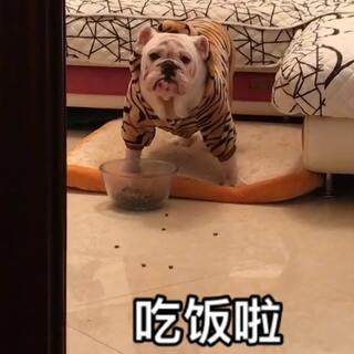 #宠物##宠物狗狗##狗狗日常#总爱掉饭