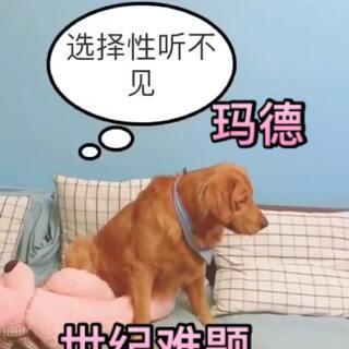 #我要上热门##宠物##汪星人#@宠物频道官方账号 还思考了一下………队长在看粑粑给丸子穿鞋子……