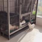 今天天气好,让小哇晒晒太阳,委屈塞哥哥在笼子里待会儿#宠物#