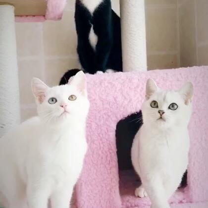 快来看这里有三只小可爱😘姐姐家的猫咪#宠物##领养代替购买#