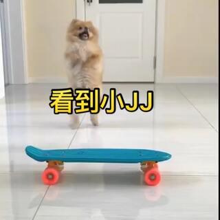 嘟嘟厉害啦#宠物##博美##狗狗玩滑板#