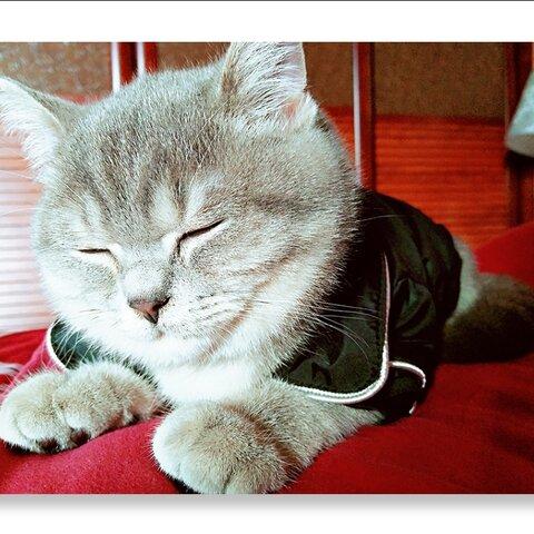 【花姑娘7570美拍表情文】少爷的午睡时间到,换好睡衣,蹦.图片