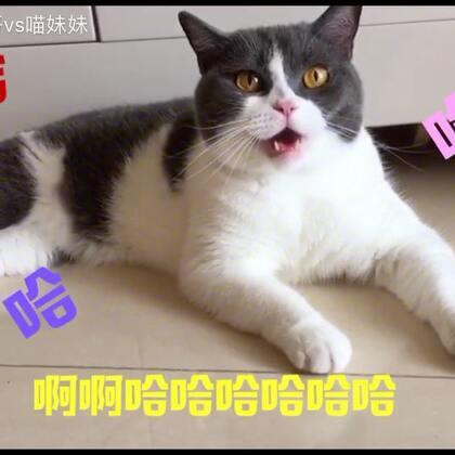 据喵星球猫仔队最新爆料📣想撸阿妹的喵粉们~大事不妙摊事了😬摊上大事了😨不信你们自己看^猫友会友情提示^特此通告⚠️🔔#宠物##给宠物配音##喵妹嘻哈剧#