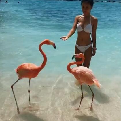 #巴哈马#美少女的加勒比海美洲岛屿流浪记 自由潜水之旅#旅行##女神#