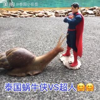 清早,出大事了#超人##小蜗牛の爬行记#