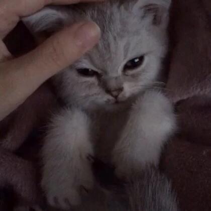 家里来了一只三个月大的小宝宝,还没取名字,你们有没有好的建议呢?👏留言,名字被采纳的有红包哦!#宠物#