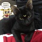 万圣节要到了,替朋友家养的家猫COS一下 #万圣节####黑猫####美少女战士####COSPLAY####人2####People2####征女友##