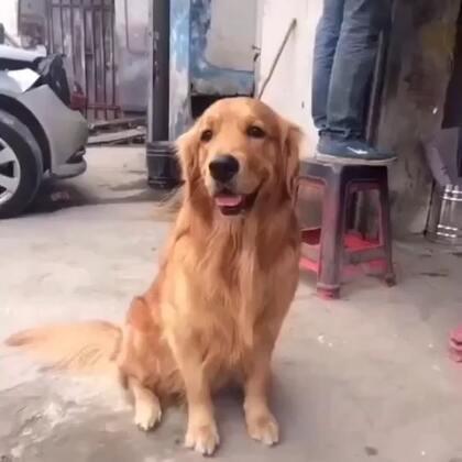 #宠物##搞笑#笑可能不道德 可tm我憋不住啊😂😂😂