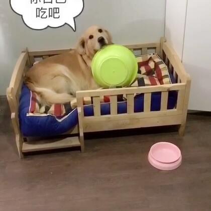 拿着盆走的时候还慢慢的#宠物#,偷偷的#搞笑#