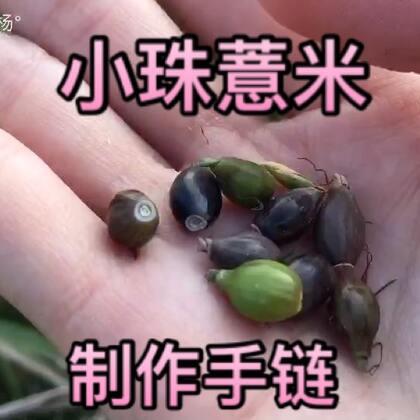 #手工##乡间美食#农村的孩子小时候应该不陌生。今天我用小珠薏米给家人做了手链,看上去还不错。#我要上热门#@美拍小助手