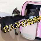 🙈你们点开视频随意感受下😂两喵争夺包包的打架凶残现场#宠物##日志##俩喵欢乐多#