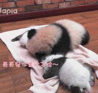 #萌团子陪你过周末#说好的帮妹妹盖小毯子的呢?怎么感觉画风不太对的样子???