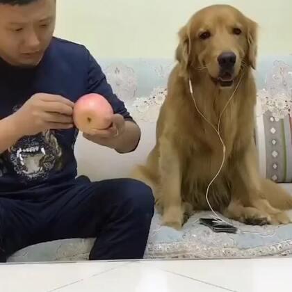 #宠物##搞笑视频#轮胎:就这智商还跟我斗🤣