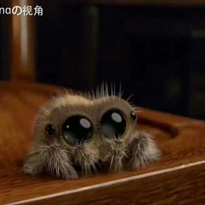 一位搞动画制作的网友自己创作设计了一只叫做Lucas的萌版蜘蛛,并邀请他的小侄子倾情配音,水灵灵的大眼睛配上一口奶音,第一次觉得蜘蛛这么可爱😊